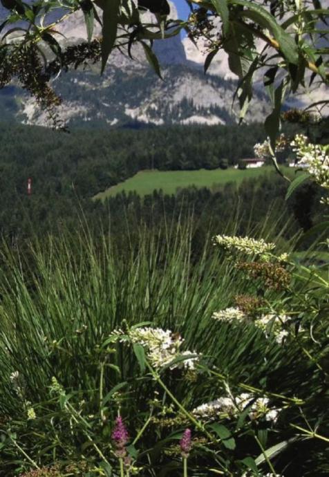 Im Garten des Kaisers... Image 3
