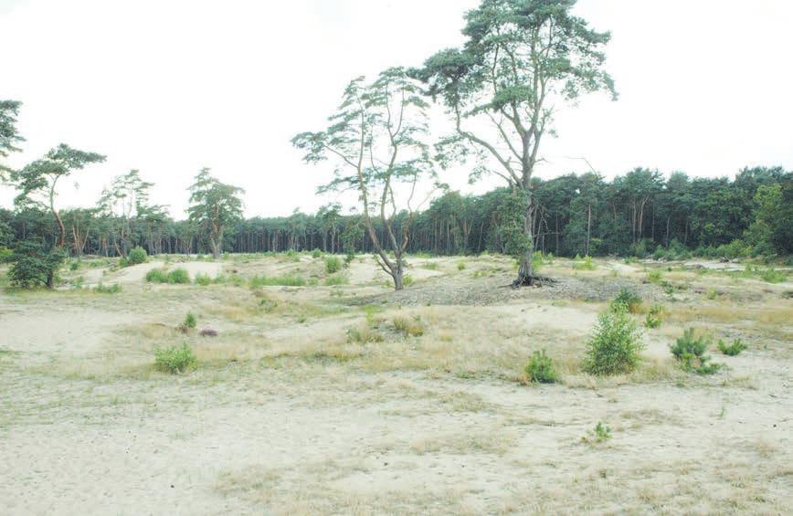 Die Holmer Sandberge sind ein Naturerlebnis der besonderen Art Foto: Kuno Klein