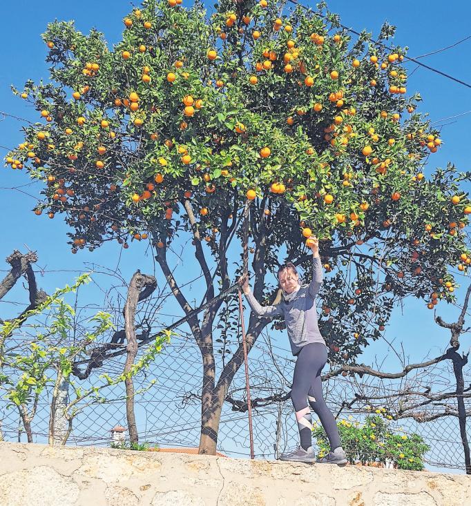 Entschädigung für viele Strapazen: An einer Kirche entdeckten Michaela und Kristin einen Orangen-Baum mit vielen saftigen Früchten. PRIVAT