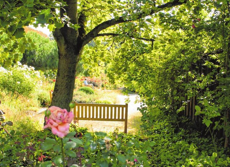 Im Sommer findet man in den Parks eine große Blütenpracht vor, wie hier im Herzogenriedpark...