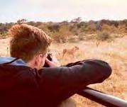 Tierische Begegnung: Gladbachs Patrick Herrmann beobachtete auf Safari in Südafrika einen Löwen.