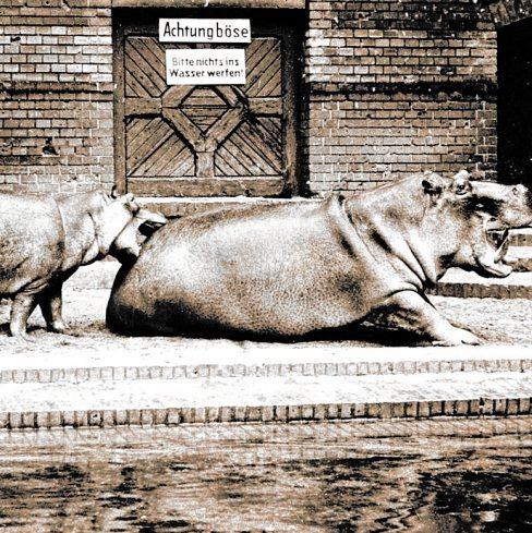 Knautschke, Knut und Knorke Image 3