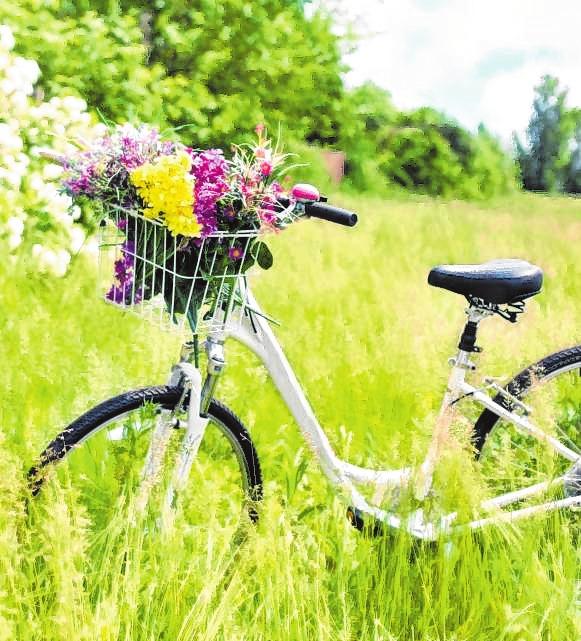 Mit dem Fahrrad das satte Grün erkunden.Bild: Pixabay