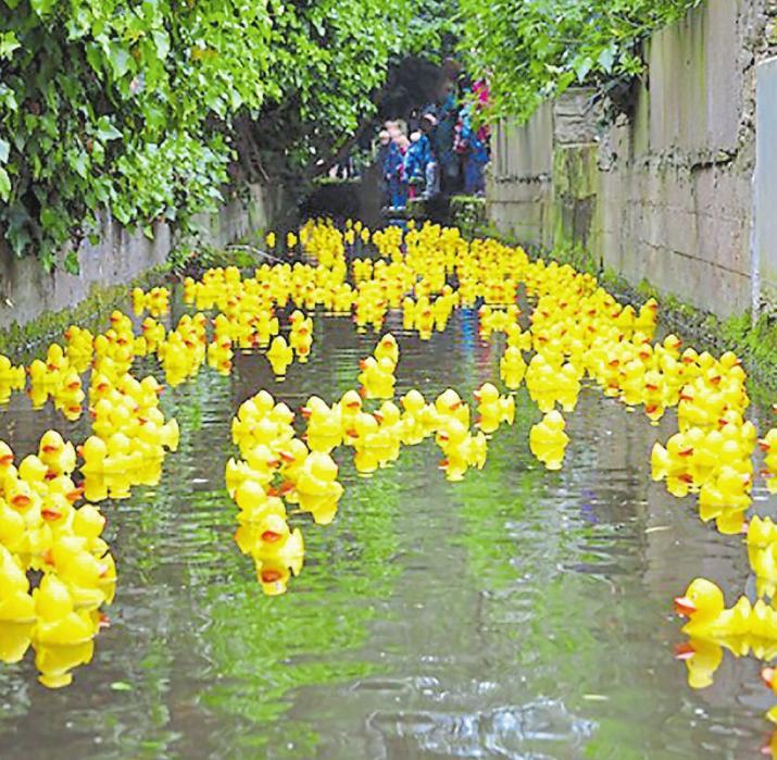 Hunderte von gelben Gummientchen stürzen sich am Donnerstag um 14 Uhr in den Ewaldibach. Auf die schnellsten warten Preise. Foto: abi