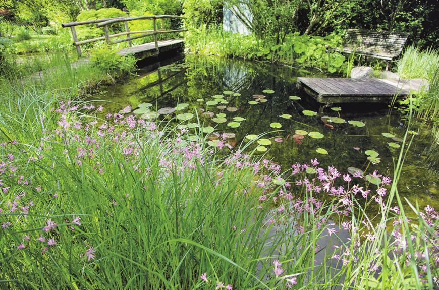 Ein Gartenteich ist ein ganz eigenes Ökosystem, das der Pflege bedarf.