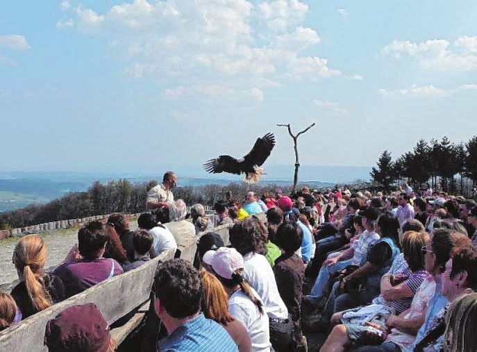 Die Flugschauen mit majestätischen Vögeln und die Elche sind beliebte Anziehungspunkte im Wildpark Potzberg. Bilder: Wildpark Potzberg