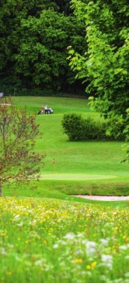 Grünes Paradies Image 5