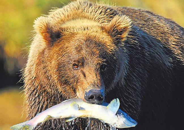 Rendezvous mit dem Bären: Für 2019 plant Eggers eine Westkanada-Reise.