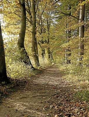Bei einem Waldspaziergang im Ruheforst einfach einmal die Seele baumeln lassen. FOTO: HFR