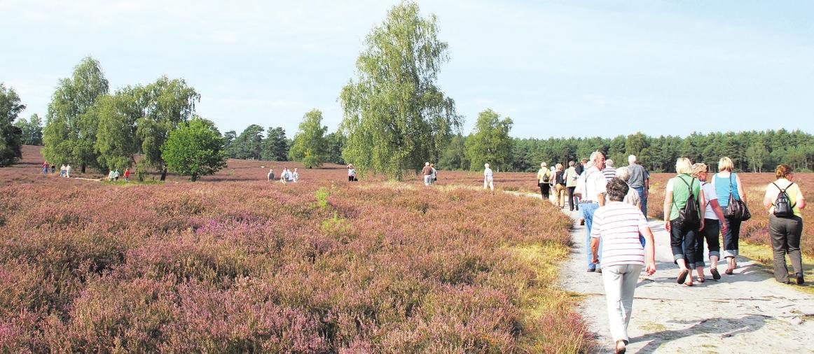 Es wird wieder vermehrt Urlaub in der Heide gemacht. Foto: Archiv
