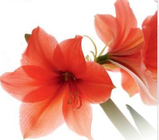 Foto: emmi – stock.adobe.com