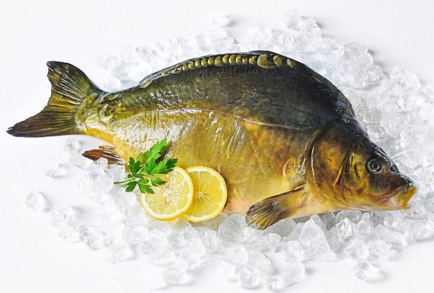 Jetzt ist wieder Karpfenzeit: Man kann ihn in vielen Gaststätten und Restaurants genießen. Oder man kauft ein frisches Exemplar beim Teichwirt und bereitet es zu Hause selbst zu.Foto: Getty Images