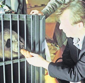 Eberhard Diepgen mit Panda-Bärin Yan Yan 1995