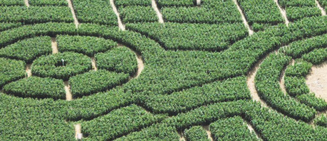 Maislabyrinth am Hegehof in Ladenburg: Tierisch gutes Abenteuer im Mais-Dschungel-Labyrinth