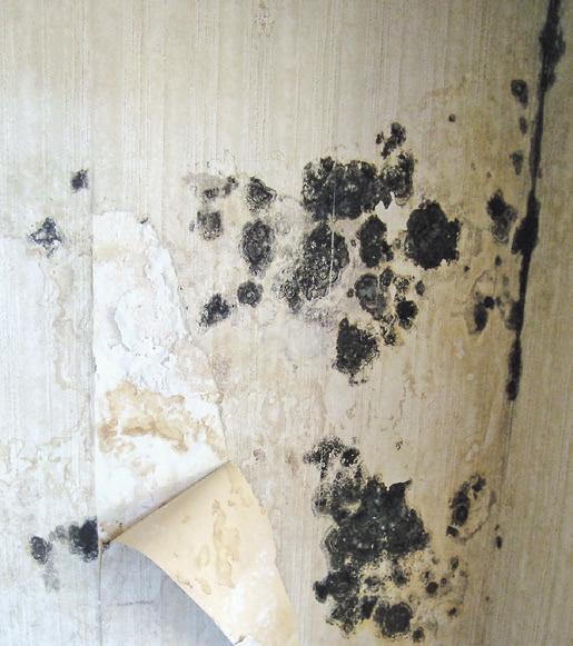 In manchen älteren Häusern versteckte Probleme sind für den Käufer nicht auf den ersten Blick ersichtlich. Foto: djd/Bauherren-Schutzbund