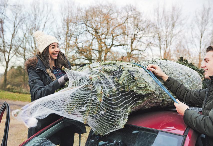 Keine Kleinigkeit: Beim Transport eines Weihnachtsbaumes sollte man auf ein paar wichtige Regeln achten. Foto: dtd/thx