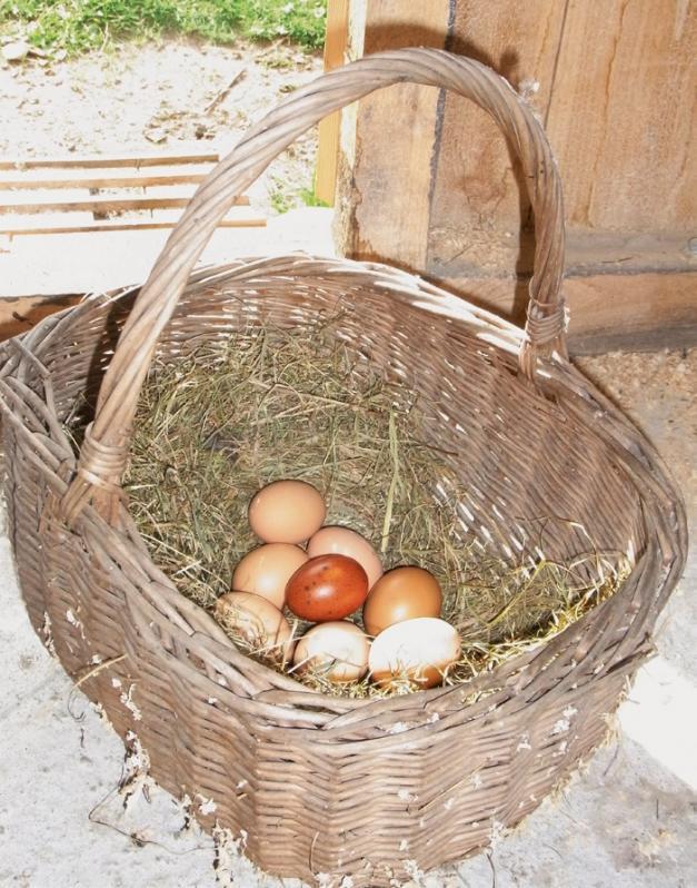 Kein Kuckucksei: Das braune Ei ist ein Zuchterfolg von Friedrich Wiese. Foto: Photowerk