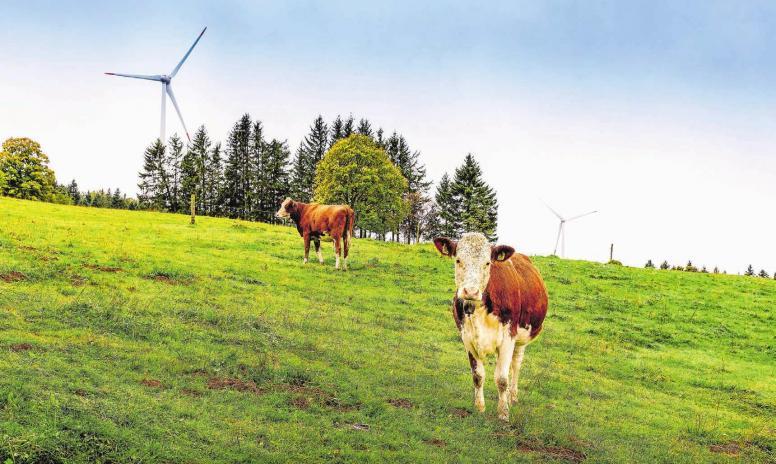 Der Windenergie fehlt Rückenwind