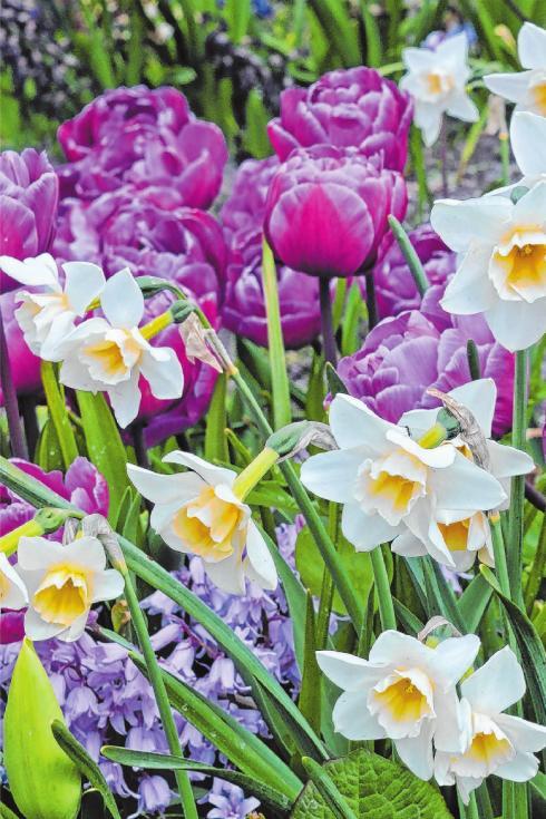 Jetzt an die wunderschönen Boten des Frühlings denken