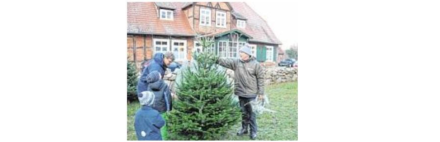 Weihnachtsbaumverkauf auf dem Adventsmarkt im Rühner Kloster
