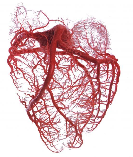 Gefahr für Herz und Kreislauf