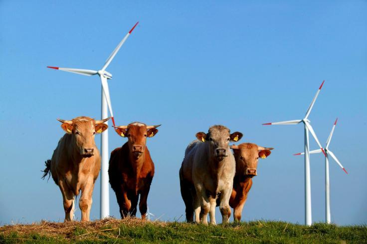 """Woodstock der Windkraft"""