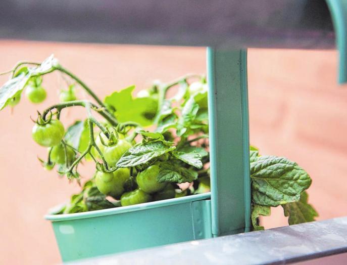 Gemüsepflanzen sind Sonnenkinder