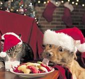 Weihnachten auch für den Hund?