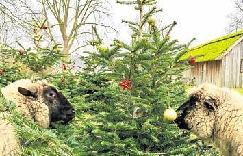 Wann ist endlich Weihnachtszeit?