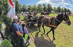 9. ASCANIA Pferdefestival