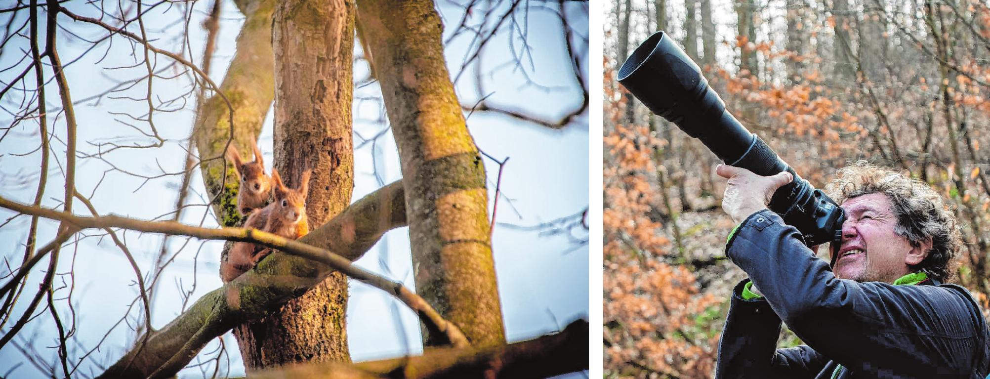 Nicht nur Vögel, auch andere Waldbewohner – wie diese beiden Eichhörnchen – bekamen die Teilnehmer der Nabu-Frühlingswanderung vor die Linse. Bilder: Thomas Neu