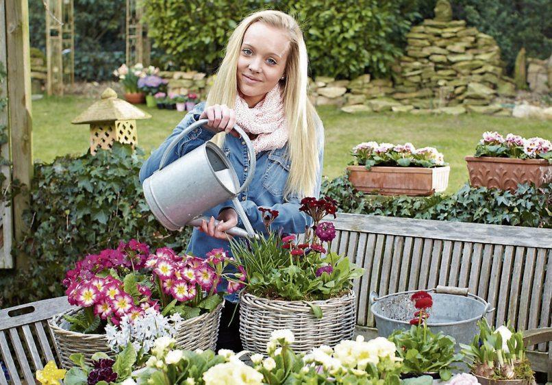 Primeln und andere farbenfrohe Frühlingsblüher vertreiben das Wintergrau im Garten und auf dem Balkon. Bunte Farbtupfer bringen Freude und Optimismus. Bild: GMH/FGJ