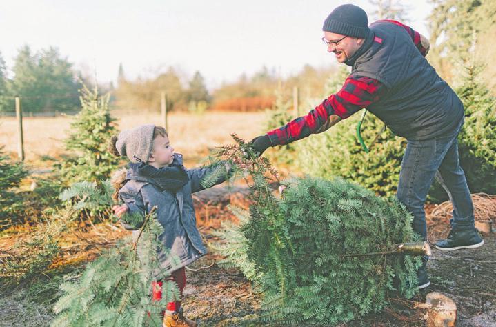 Den Christbaum selber zu schlagen, ist ein Erlebnis für Groß und Klein.Foto: ©Crystal Sing - stock.adobe.com