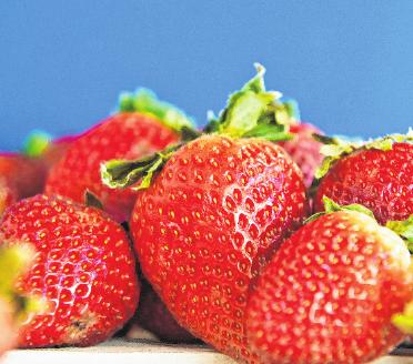Schön aromatisch: Damit das so bleibt, bewahrt man Erdbeeren am besten ungewaschen und mit Blattkelch auf. FOTO: A. WARNECKE, MAG
