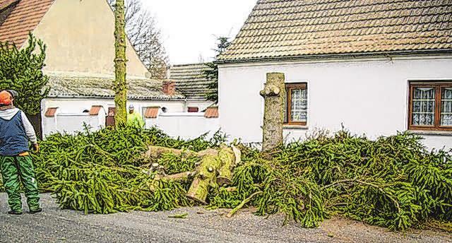 Zum Leistungsspektrum des Frankfurter Unternehmens gehört auch das Fällen von Bäumen und deren Entsorgung. Fotos: Liebner