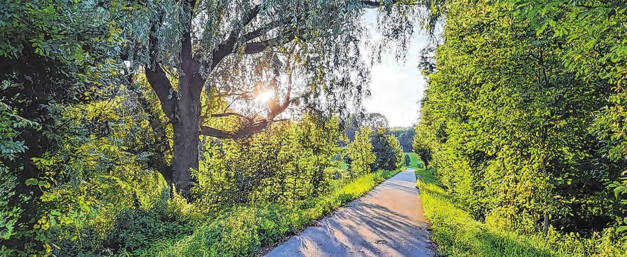 Die idyllische Landschaft entlang des überregionalen Rad- und Gehweges lädt zur Erholung ein. Mittlerweile wurde der Weg auf stolze drei Meter verbreitert. Foto: Straubinger