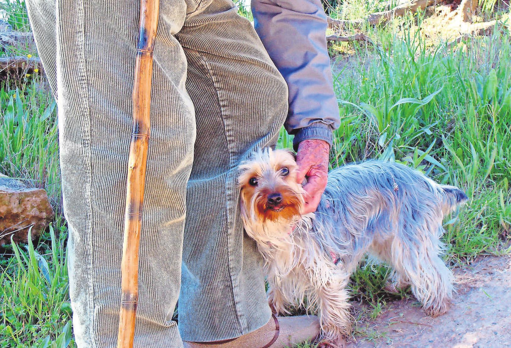 Ein Hund kann immer ein treuer Begleiter sein, braucht aber auch viel Zuwendung und Pflege. Foto: Pixabay