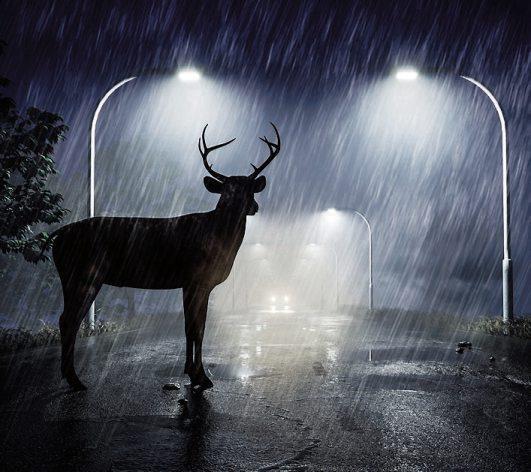 Bei schlechtem Wetter und in der Dämmerung ist die Gefahr durch Wildwechsel im Straßenverkehr besonders groß. Bild:Mediaparts/Fotolia/Itzehoer