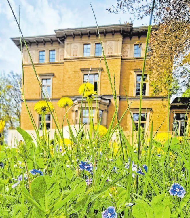 """An Vegetation mangelt es in der Kreuztaler Innenstadt sicher nicht: Diese beiden Impressionen stammen aus der """"grünen Lunge"""" der City und sind Frühlingsmotive aus Dreslers Park. Foto: bjö"""