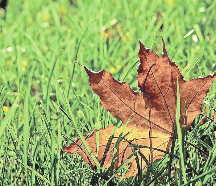 Für die Rasenpflege im Herbst ist es essentiell, herabgefallenes Laub zu entfernen. Foto: pixabay.com