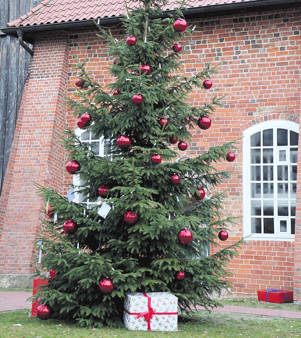 Weihnachtsbaum ist ein zentraler Bestandteil der Weihnachtstraditionen. Fotos: Müller