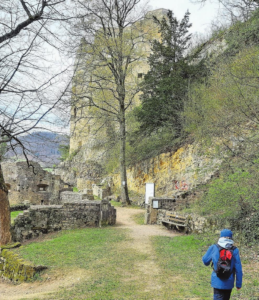 Zeit für Geschichte: Die Ruine Homburg hat einiges zu erzählen. Bild: dom
