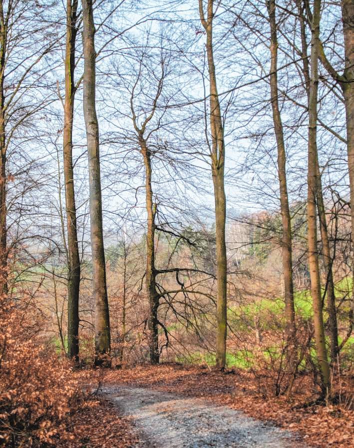 """Viele Buchen wachsen im Gebiet """"Im Buschern"""" zwischen Gronau und Wilmshausen. Bild: Thomas Neu"""