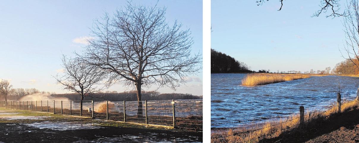 """Sturmtief """"Zeetje"""" zog Anfang des Jahres durchs Land. Diese nicht alltäglichen Fotos machte die Zierowerin Monika Bertow."""