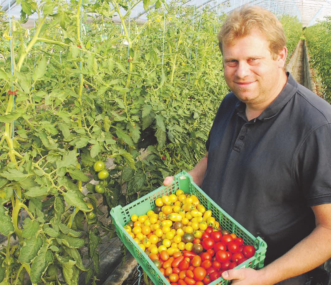 Die Tomaten aus eigenem Anbau bei Boris Lauenroth sind besonders aromatisch. Foto: Birthe Kußroll-Ihle
