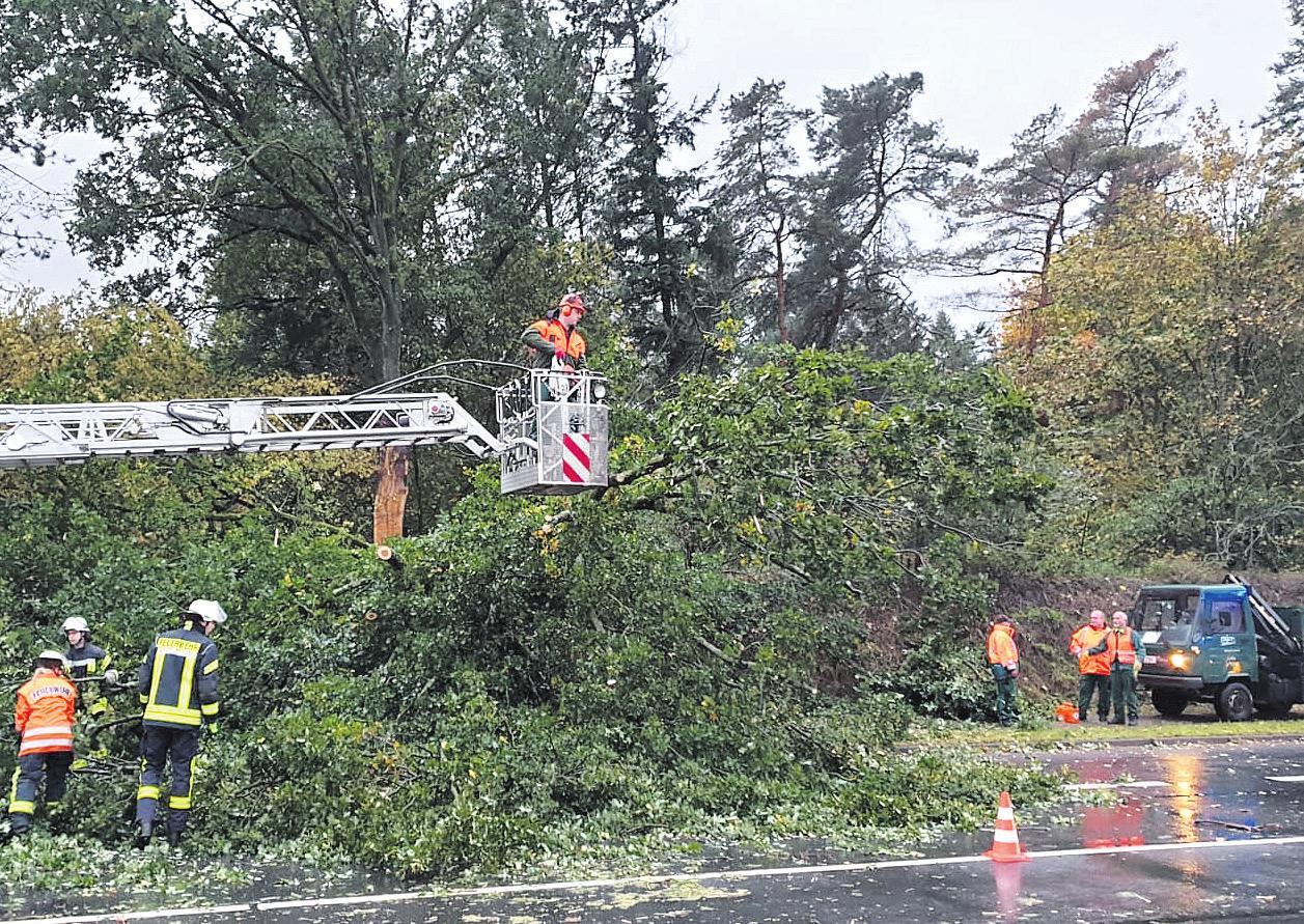 Ein Baum musste entfernt werden. Foto: Feuerwehr Celle