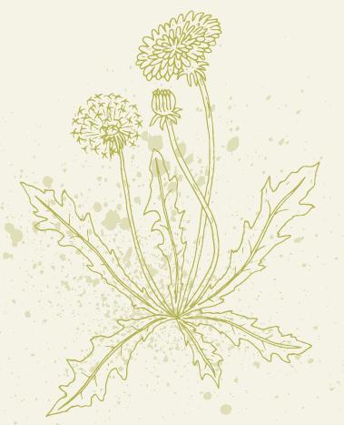 Frühjahrs-Wildkräuter im Porträt Image 2