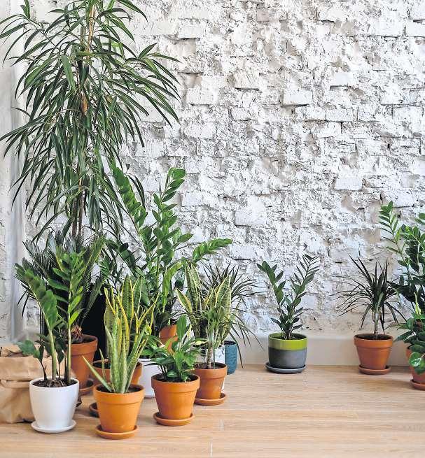 Einige Pflanzen sollten zu Beginn der kalten Jahreszeit besser an einem trockenen, gut temperierten Lagerplatz untergebracht werden. Foto: Pexels