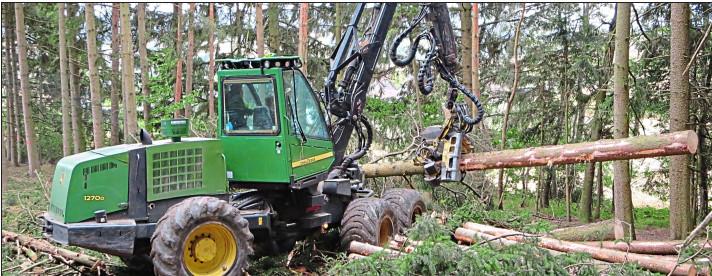 Wald und Forst - Pfaffenhofen und Schrobenhausen
