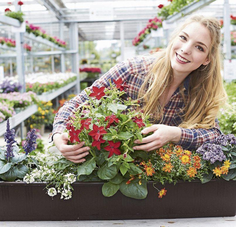 Tolle Sommerblumen: bienenfreundlicher Ziersalbei (Salvia), weißes Steinkraut (Alyssum), rot blühender Ziertabak (Nicotiana), gelboranger Zweizahn (Bidens) und duftende Vanilleblume (Heliotrop). Bild: GMH/FGJ